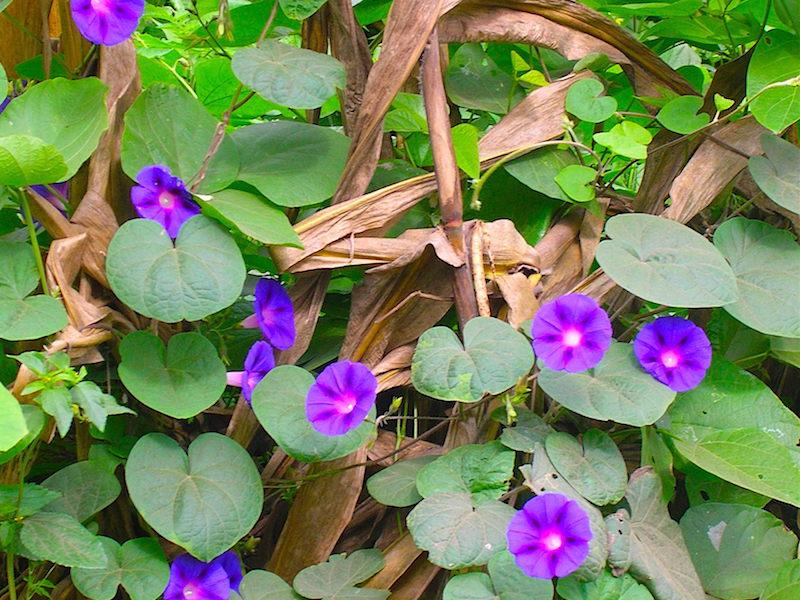 Flowers on Brava