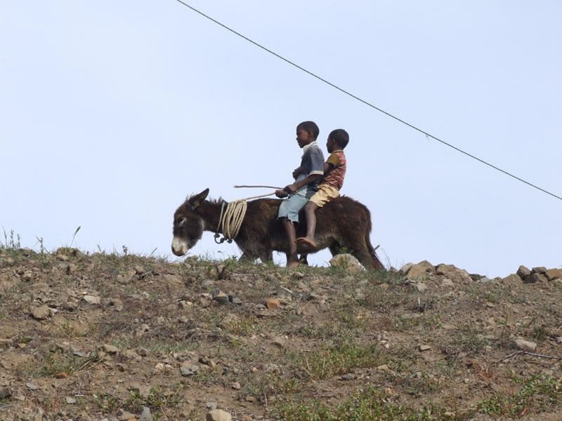 Children on a donkey, Santo Antão