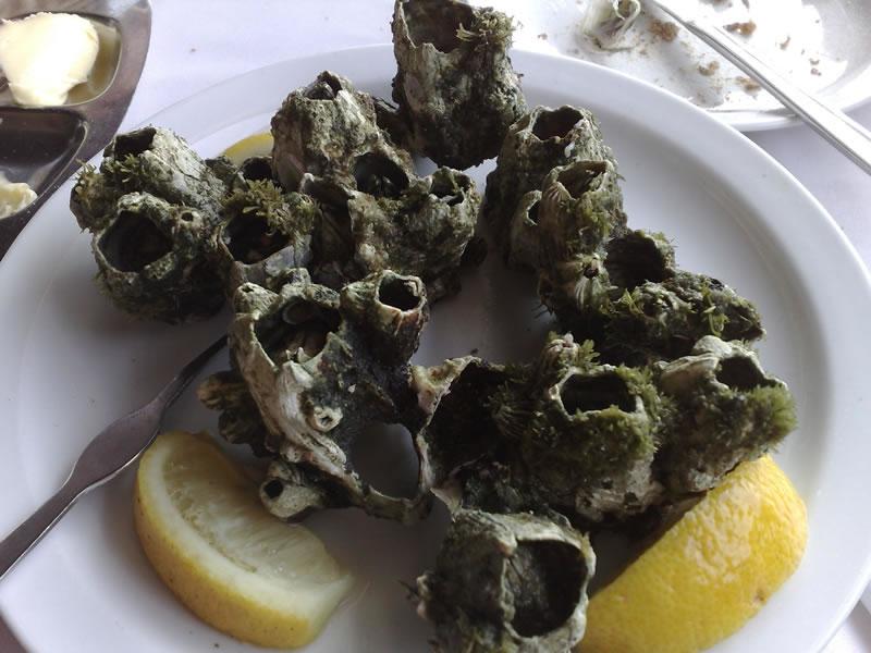 Craca (barnacles) on Santo Antão