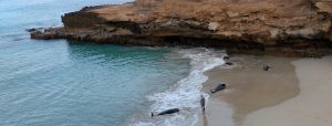 stranded whales at Maio