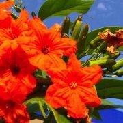 orange flowers in santago