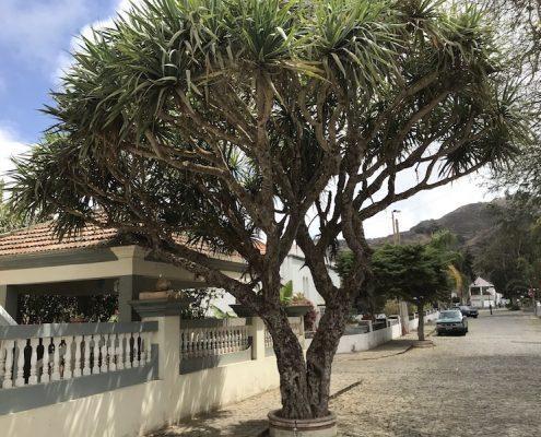 Nova Sintra Brava Cape Verde