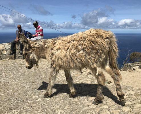 Donkey on Brava