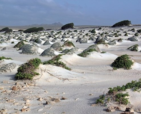 Wind blown sand on Boa Vista