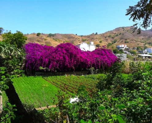 Landscape and Bougainvillea on Santiago