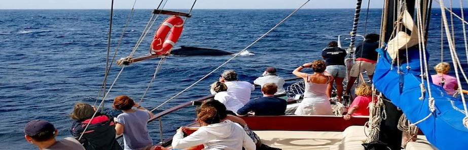 Salina Sails, Boa Vista