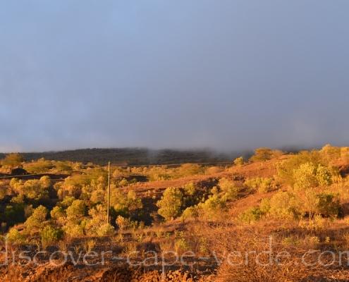 acacia forest on fogo island cape verde