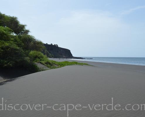 Beach morning glory on Santiago Cape Verde