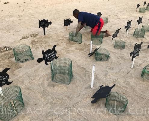 Turtle hatchery on beach on Maio