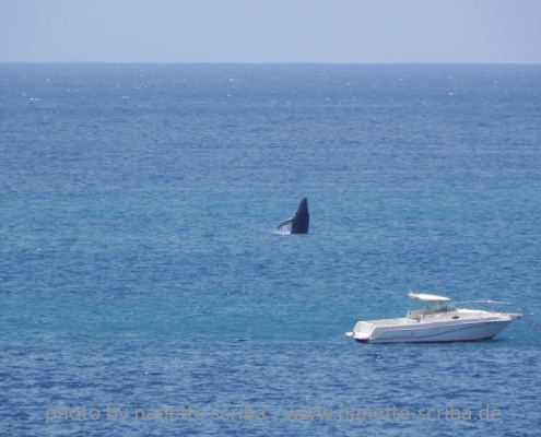 whale breaching from